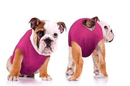 beec7117e72e No More E-Collars for Dogs-Surgi Snuggly Eases Dog Wound Care